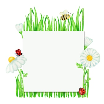 Watercolor daisy chamomile flower with fly ladybug, bee frame illustration.