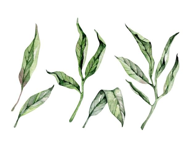 水彩装飾の葉