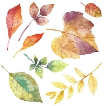 Акварель дизайн осенние листья пакет