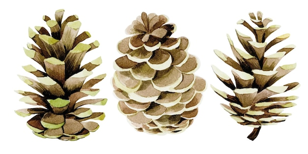 Watercolor drawing set with pine cones decoration for new year christmas
