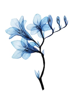 Акварельный рисунок прозрачные синие цветы фрезии на белом фоне
