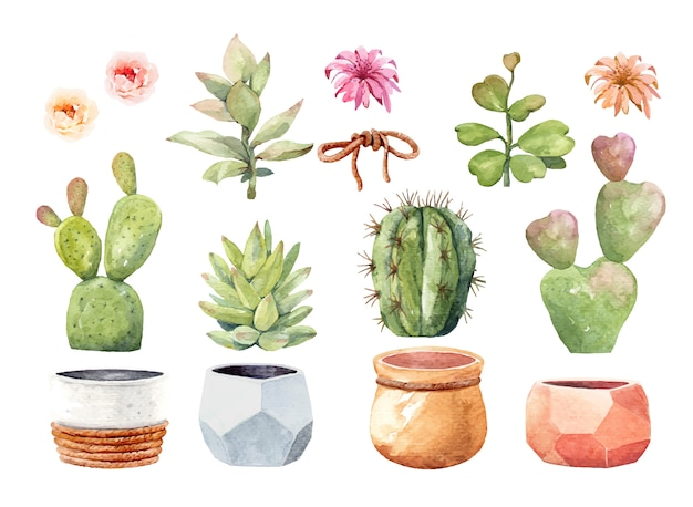 Watercolor element cactus cacti and succulent with pot