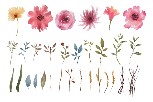 Watercolor elements of flowers and leaves