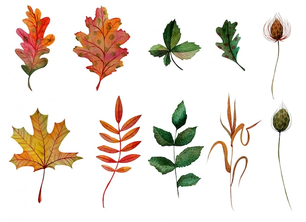 Watercolor elements set autumn leaves