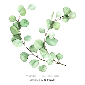 Watercolor eucalyptus branch