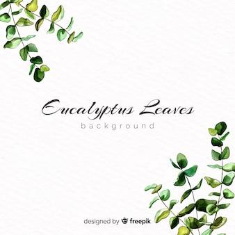 수채화 유칼립투스 나뭇잎 배경