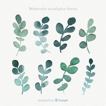 Watercolor eucalyptus leaves collection