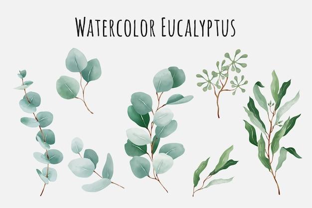 Коллекция акварельных листьев эвкалипта