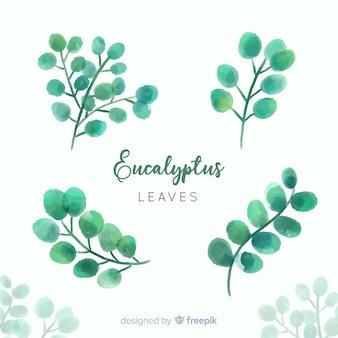 Set di foglie di eucalipto acquerello Vettore gratuito