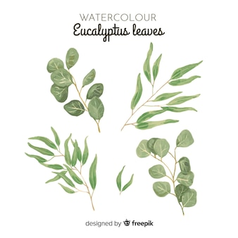 Watercolor eucalyptus leaves set