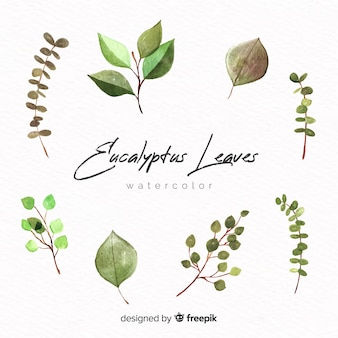 Watercolor eucalyptus leaves set