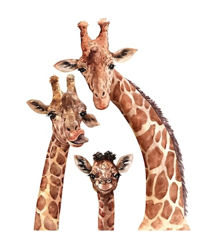 Watercolor family giraffe. south affrica animal. giraffe paint.