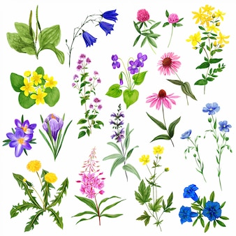 Акварельные полевые цветы, дикие травы и растения