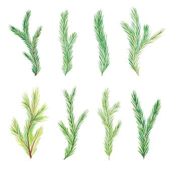 水彩モミの枝。木の枝。分離された手描きの水彩モミの枝