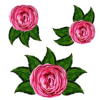 Watercolor Floral bouquets Collection