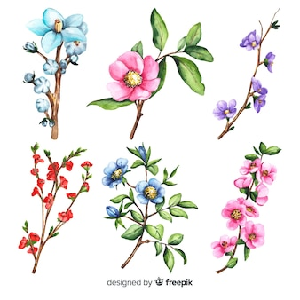 Watercolor floral branch collection