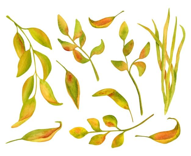 수채화 꽃 클립 아트 그림 설정