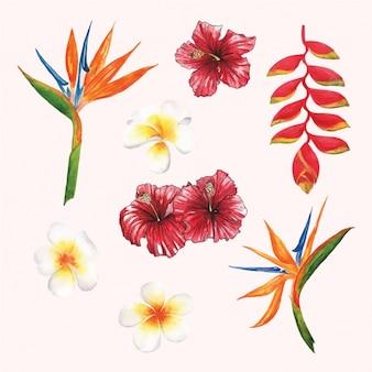 수채화 꽃 디자인 모음