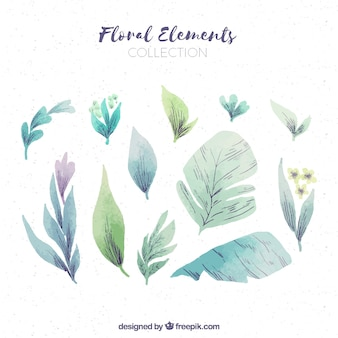Watercolor floral element collection