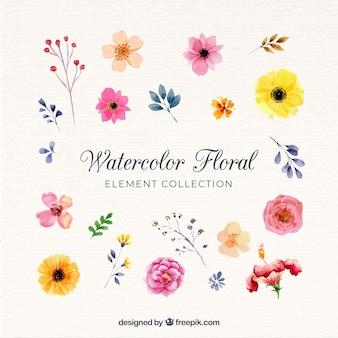 水彩画の花の要素のコレクション
