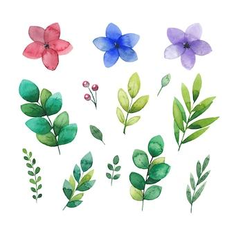 孤立した森の花と葉の水彩花要素セット