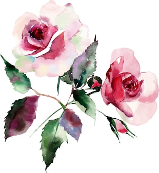 Watercolor floral herbal botanical pink red violet purple two roses