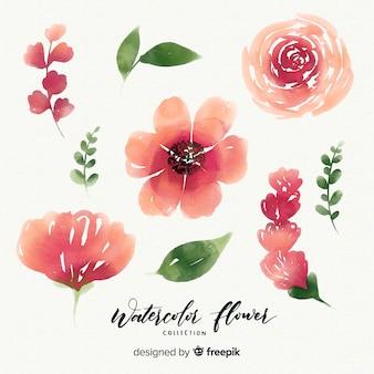 Raccolta di fiori ad acquerello con foglie