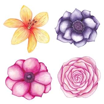 水彩花コレクション、バラ、モクレン、つぼみ、ユリ