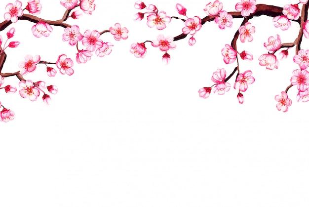 Watercolor  frame with sakura, cherry blossom.