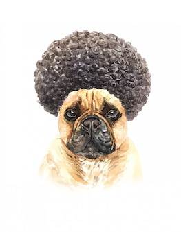 Watercolor french bulldog with afro hair.