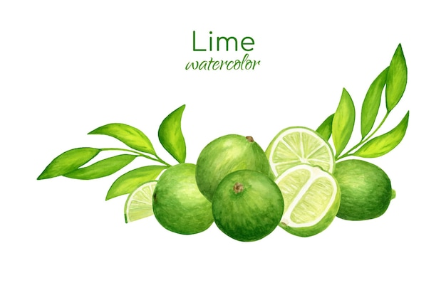 Watercolor fresh limes and leaves arrangement