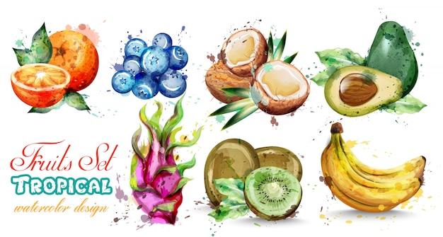 Коллекция акварельных фруктов