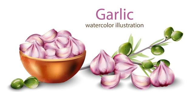 Watercolor garlic in pot with olive branch decoration