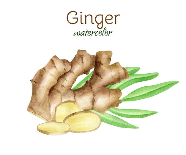 Watercolor ginger root with slices and leaves arrangement