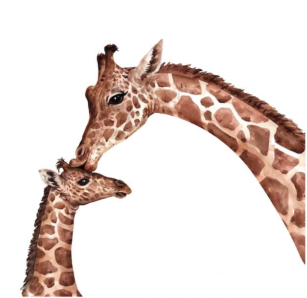 Акварель жираф поцелуй ребенка. южноафриканское животное. жираф краски.