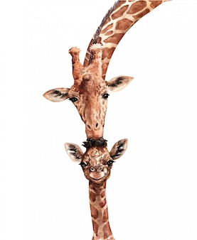 Watercolor giraffe kiss baby. south affrica animal. giraffe paint.