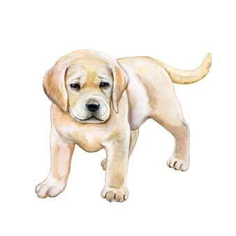 Watercolor golden retriever. puppy