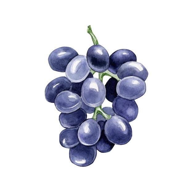 Акварельный виноград