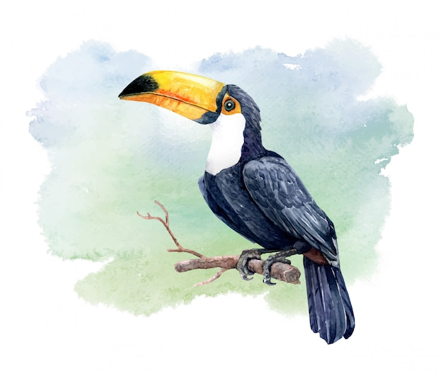 Watercolor great hornbill bird on the branches.