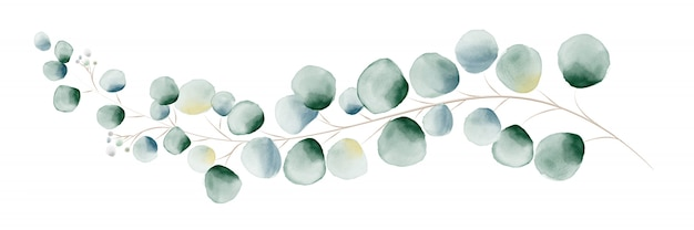 수채화 녹색 유칼립투스 잎과 가지