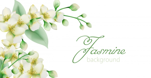 Watercolor green jasmine flowers banner with place for text