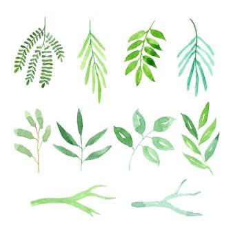 수채화 녹색 잎과 가지