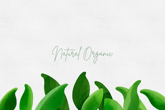 Акварель зеленые листья фон