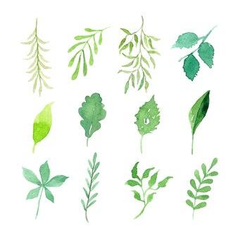 수채화 녹색 잎