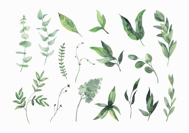 水彩の緑の葉