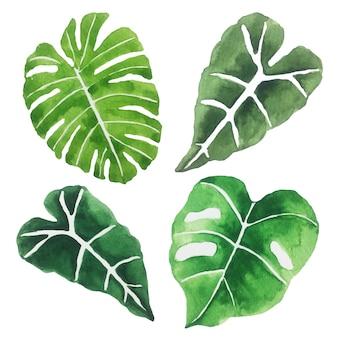 Watercolor green leaves.