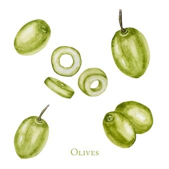 水彩のグリーンオリーブフルーツベリー、現実的なオリーブ植物イラスト分離、手描き、ラベル、カードデザインコンセプトの新鮮な熟したチェリーコレクション。