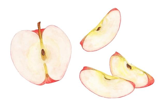 잘 익은 빨간 사과 수채화 그룹입니다. 과일 그림.