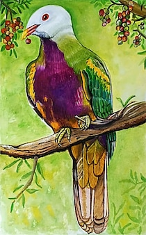 Watercolor hand drawn beautiful bird illustration