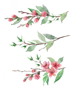 Watercolor hand drawn blooming cherry brunches with flowers and leaves